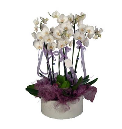 41 kırmızı gül buketi 6 Dal Beyaz Orkide