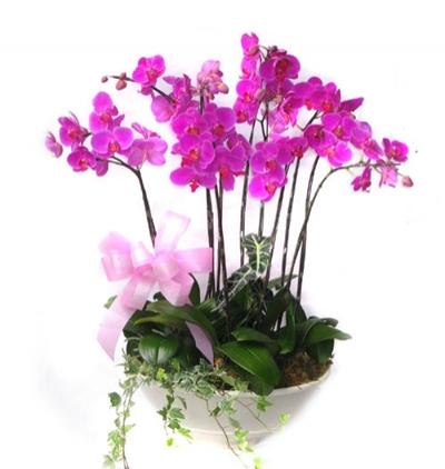 beyaz lilyum buketi 6 Dal Mor Orkide